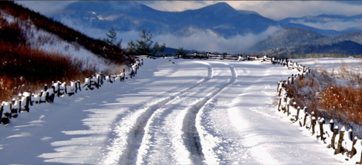 snow-tips.jpg