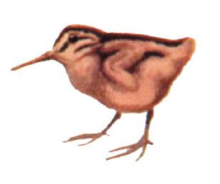 bird-nature.jpg