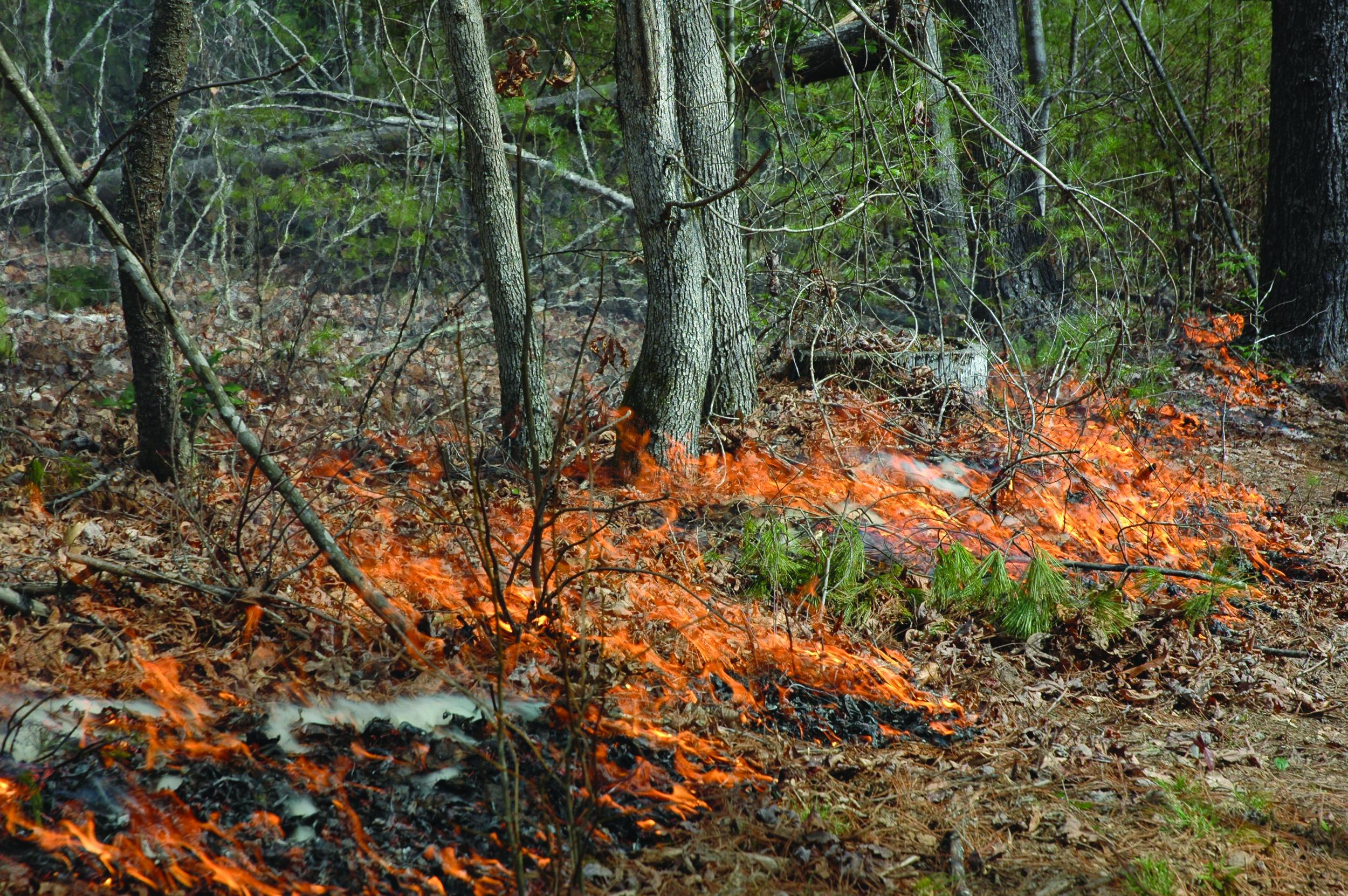 fire wise photo.JPG