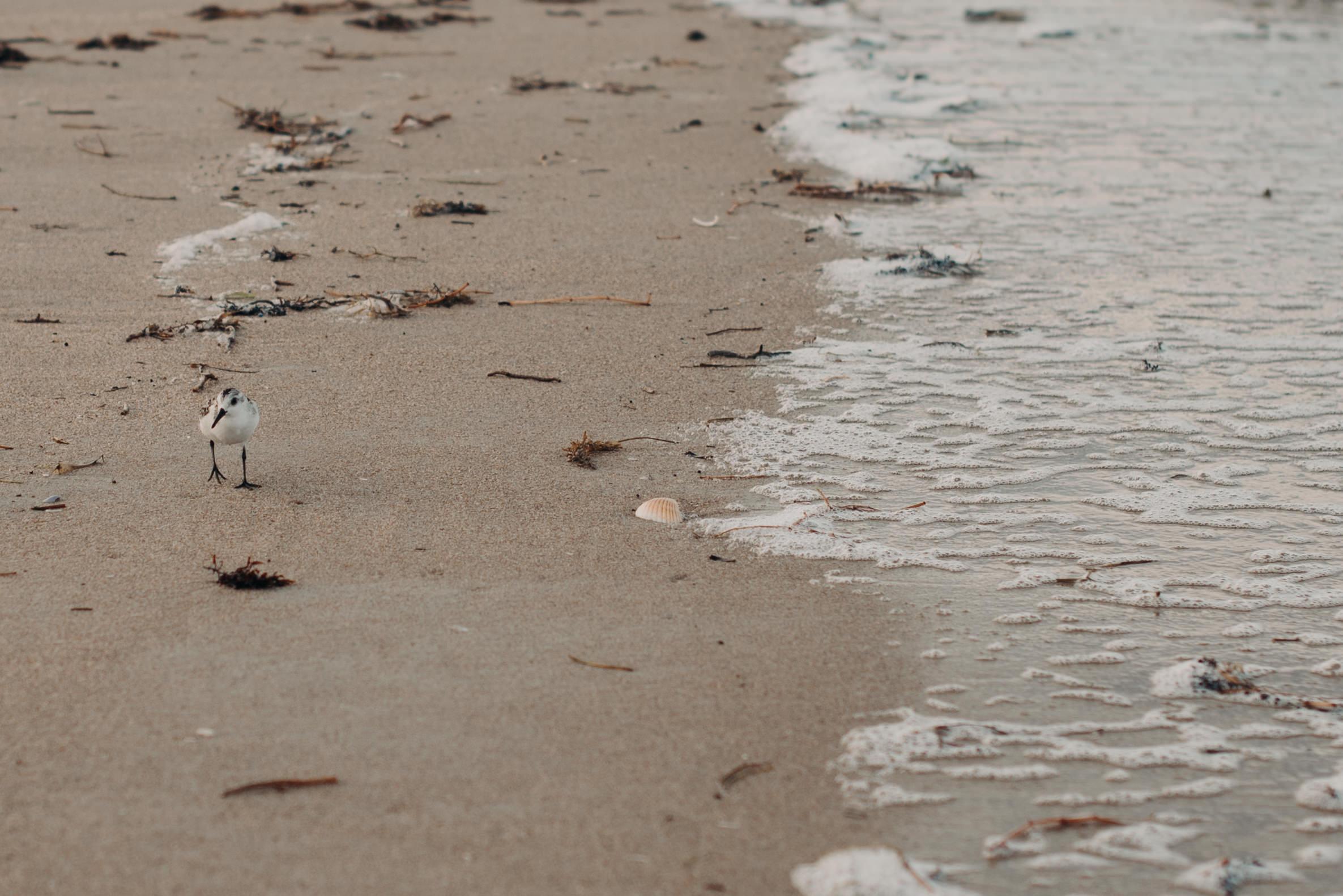 jamie-ryan-cape-canaveral-beach-florida-couple-anniversary-session-fox-and-film-111.jpg