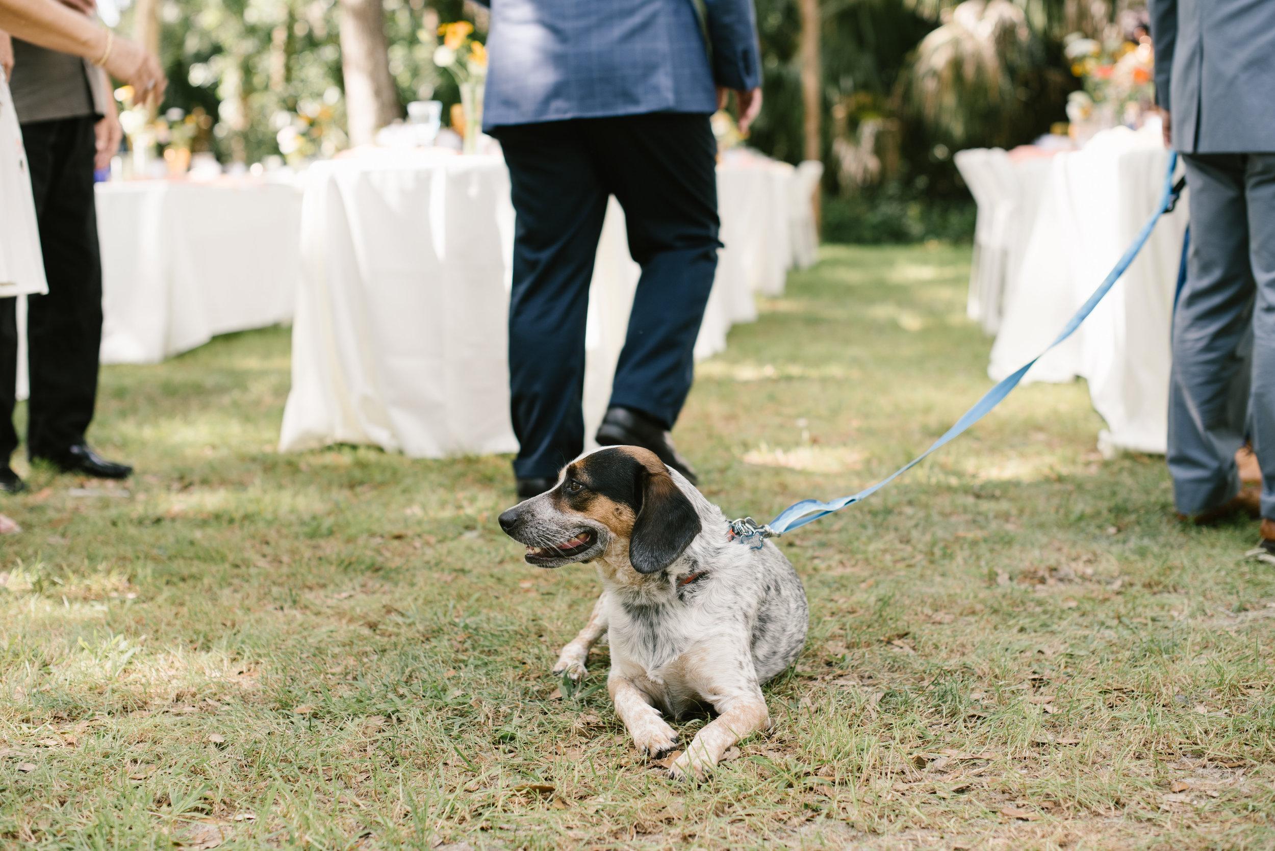 mclaughlin-wedding-369.jpg
