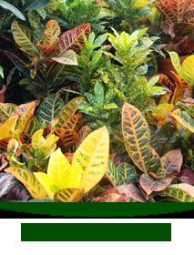 indoor-plants-2013.png
