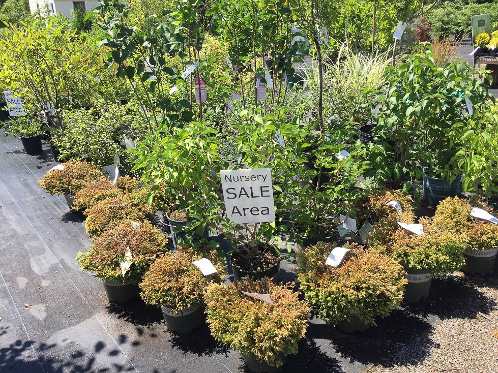 nursery sale area july.jpg