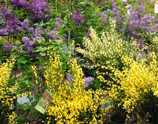 may 2 shrubs.jpg
