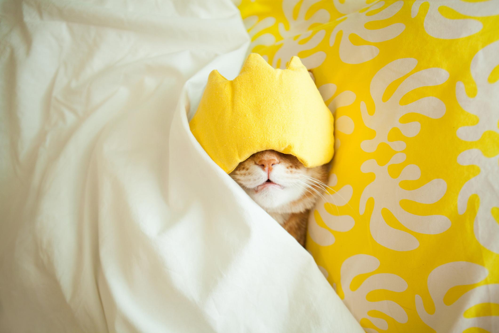 .yellow - .uh.mai.yellow.PHY.mono