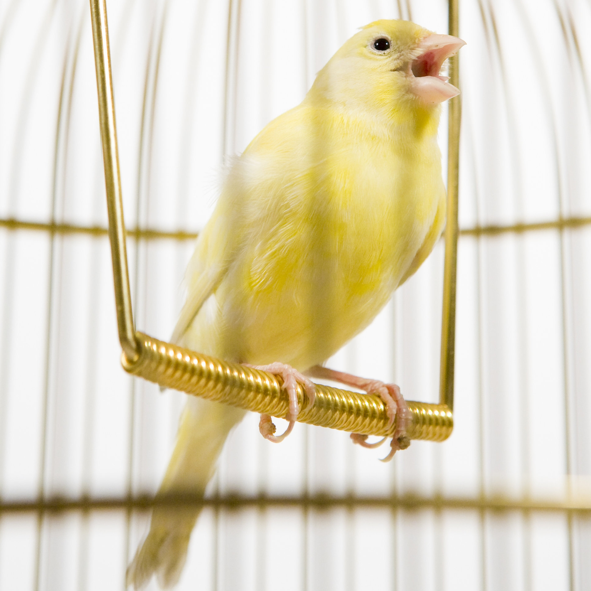 ai.yellow.b00ks -