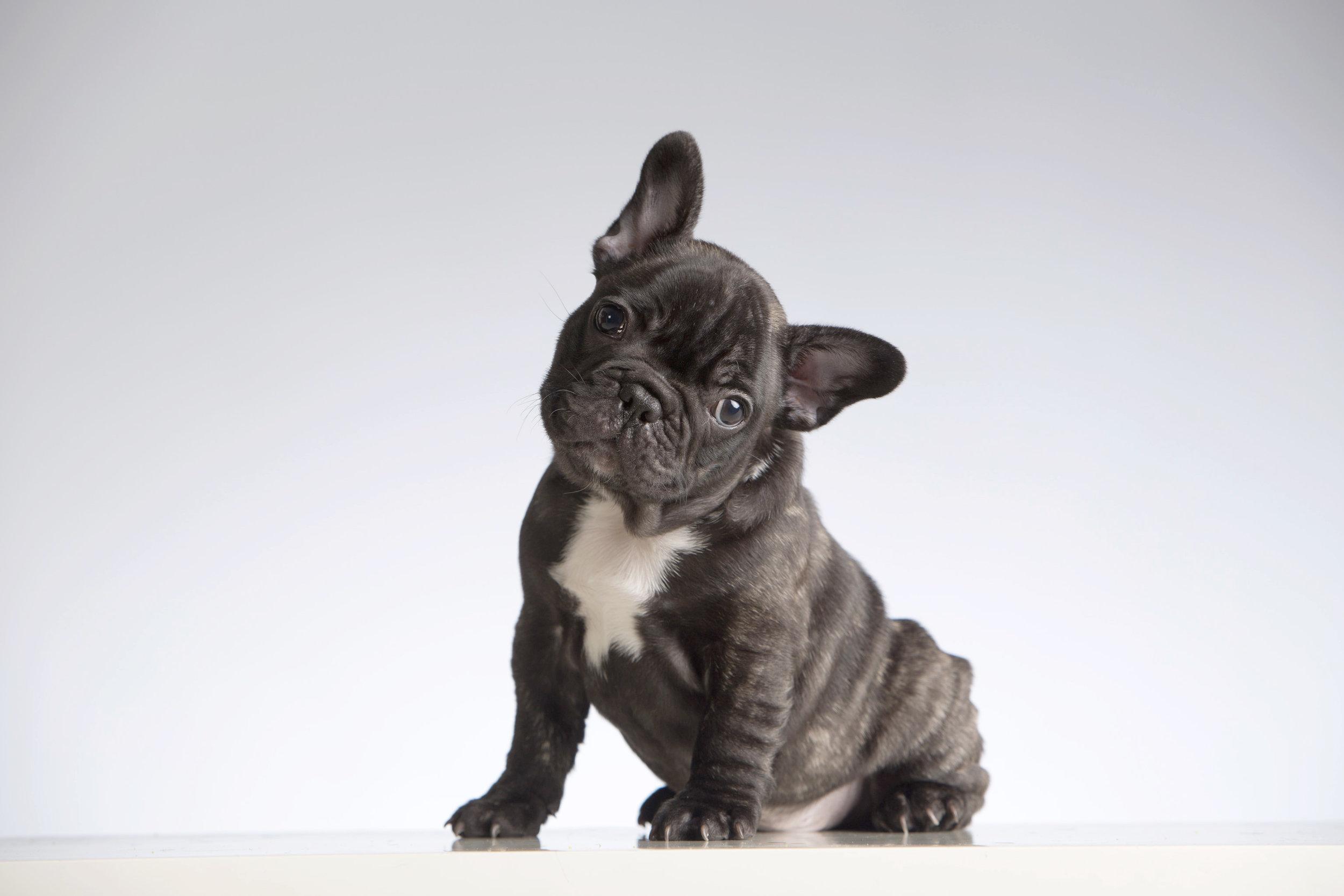 black puppy -