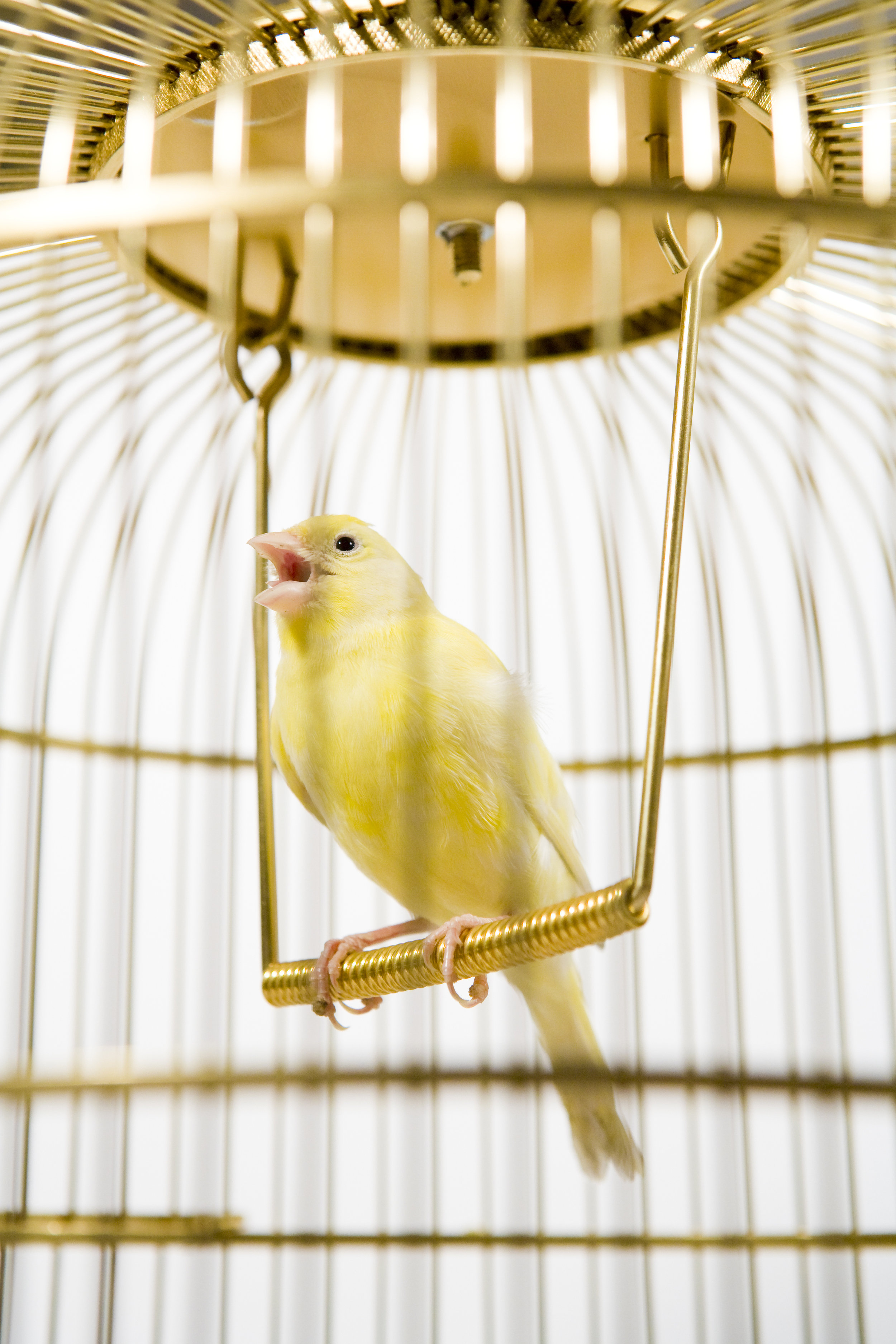 Pa - ai.yellOW.b00kscanary in The Minei know why the caged bird singsTweety BirdWoodstockBig Bird
