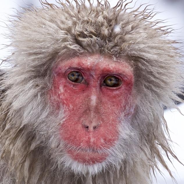 monkey -