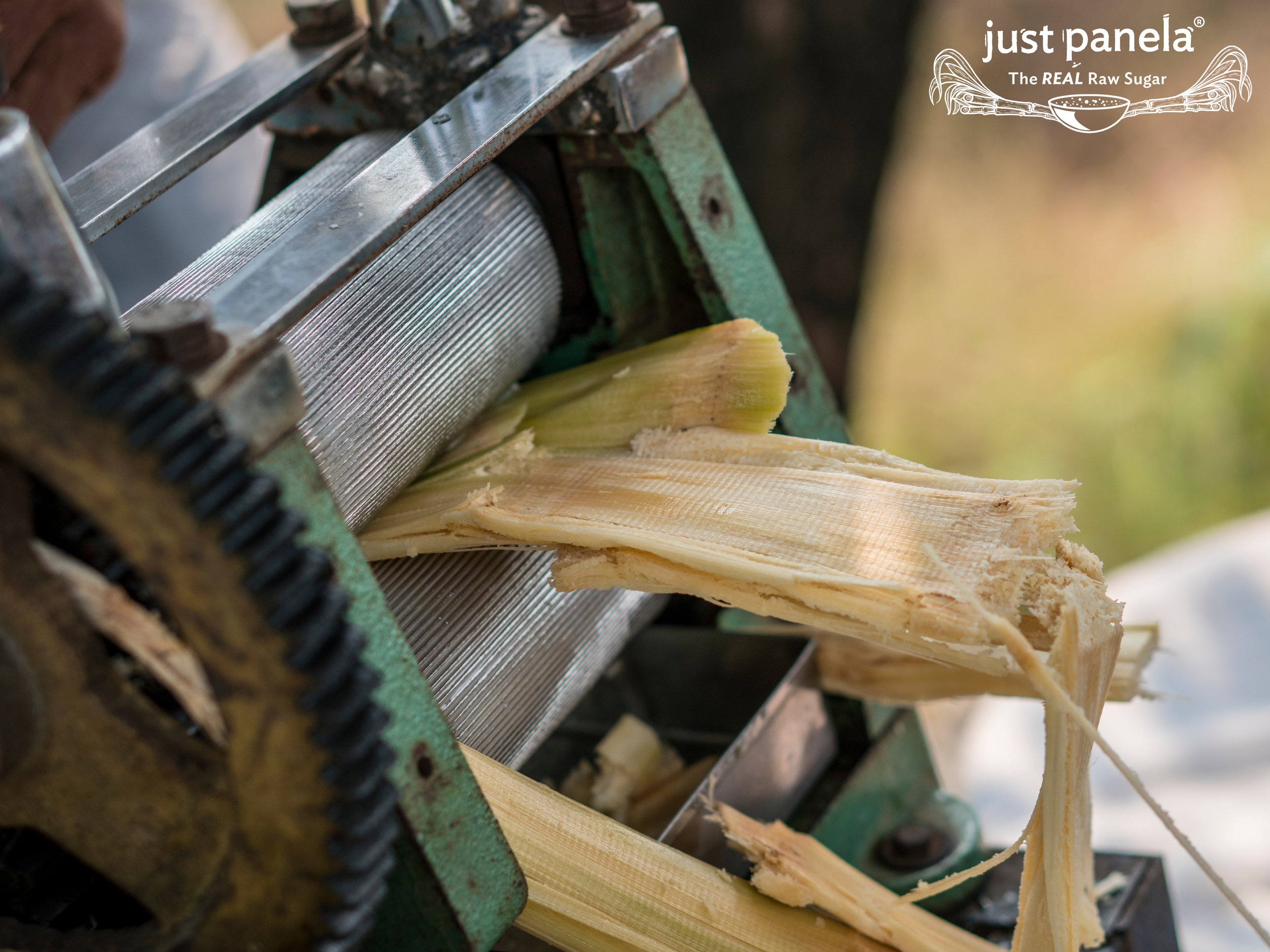 Branded Squeezing Sugarcane.jpg
