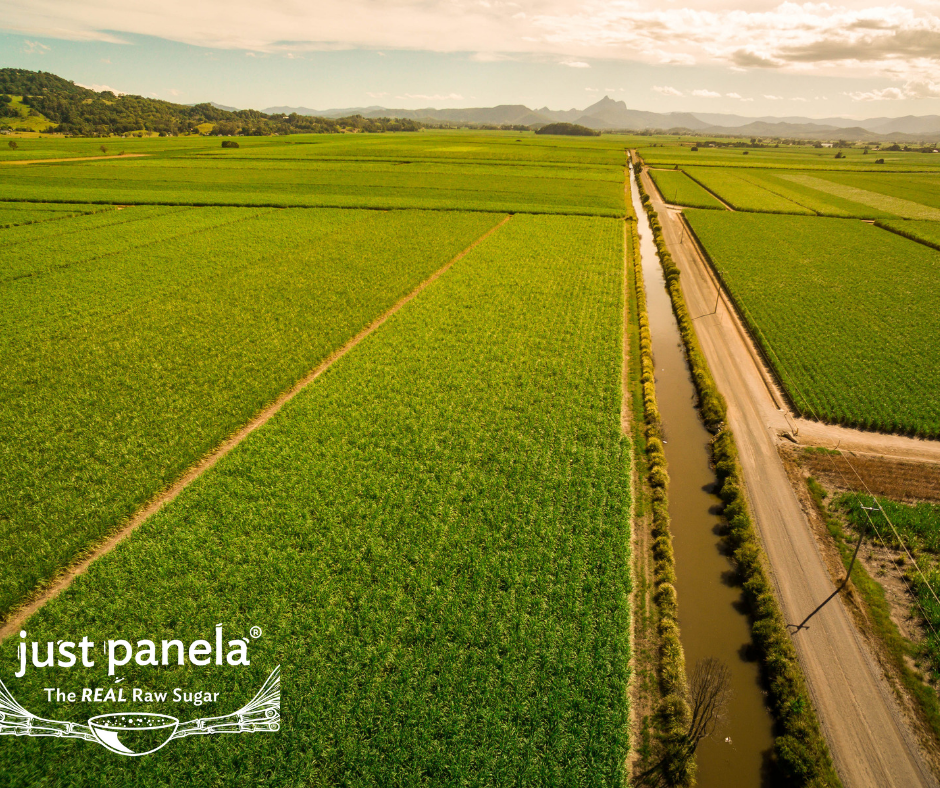 Sugarcane fields in Valle del Cauca (Colombia)