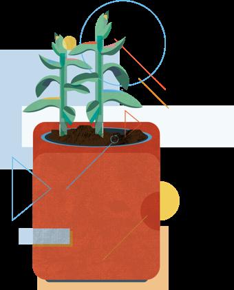 succulent-illustration.png