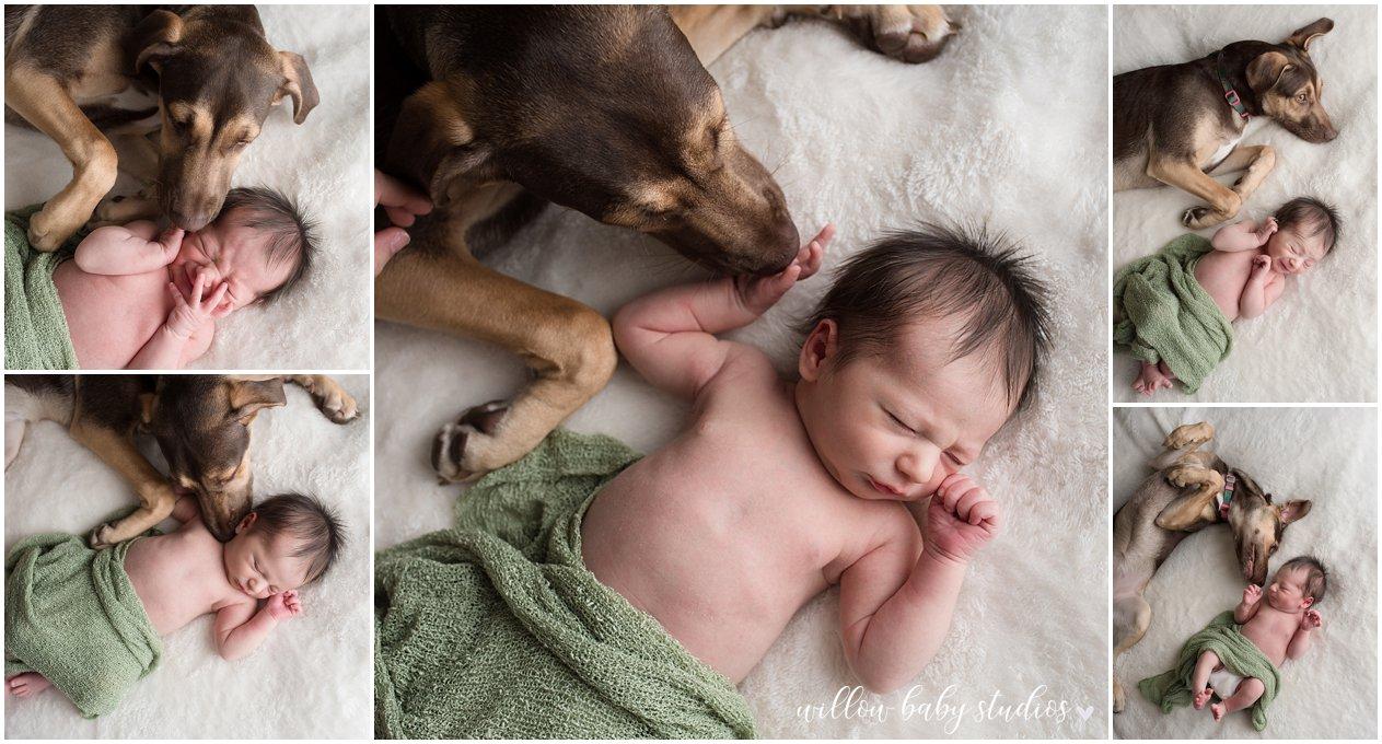 medford-ma-newborn-puppy-photography-01.jpg