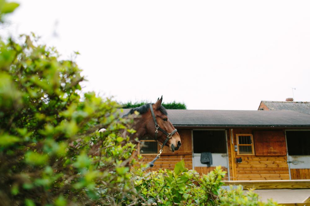 dancing-horse-314604.jpg