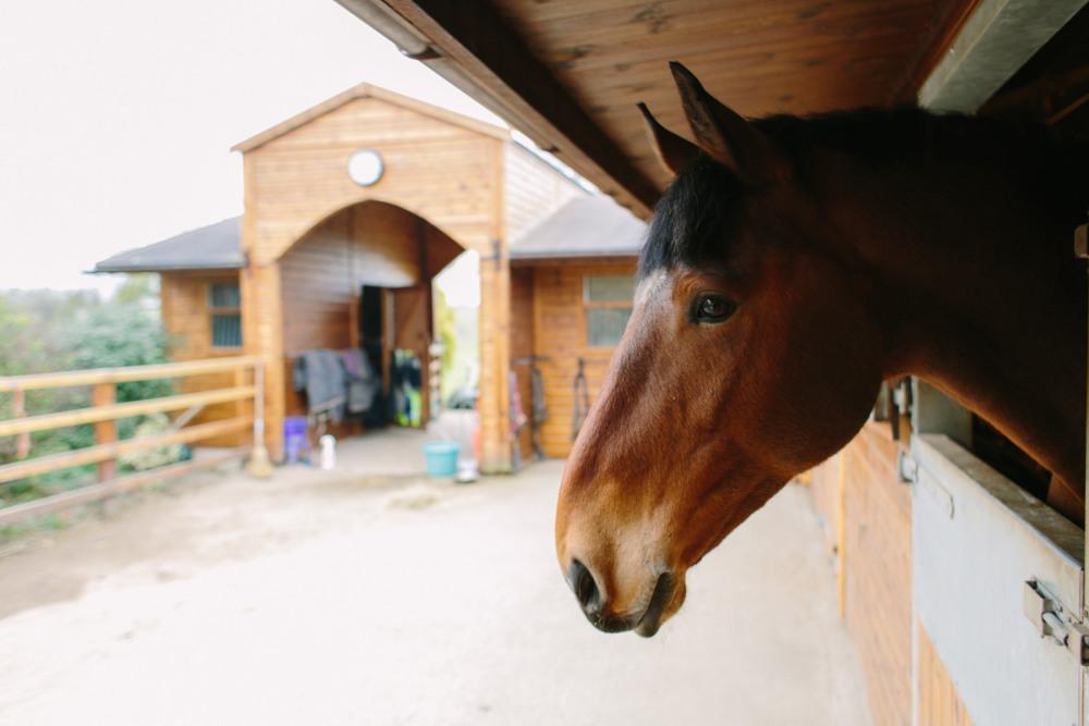 dancing-horse-314398.jpg