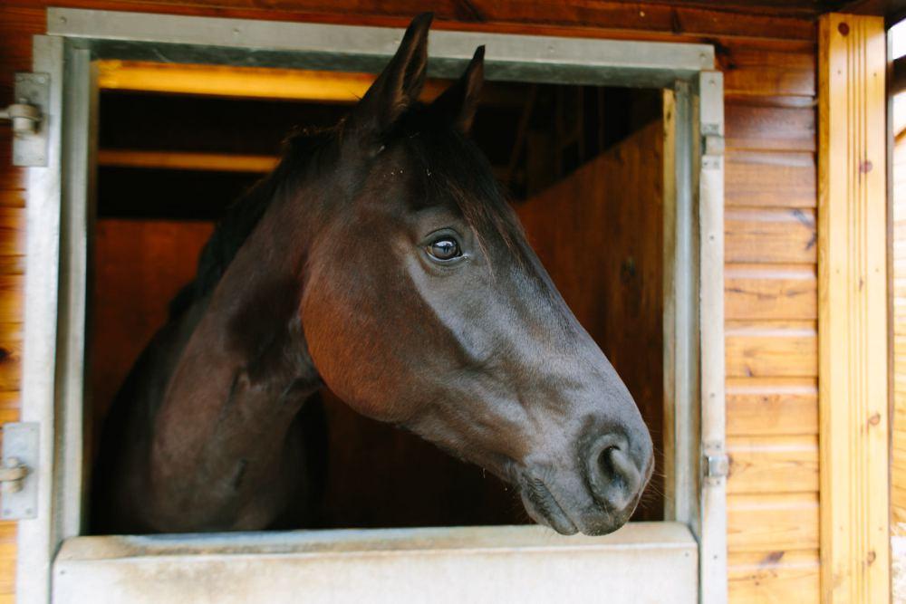 dancing-horse-314462.jpg