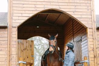 dancing-horse-325928.jpg