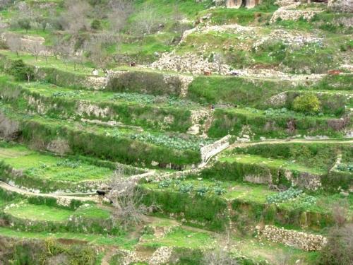Terraced farmland