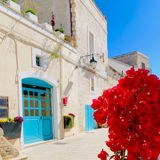 One of our favorite activities in #puglia is a morning stroll through backstreets in the old town.  Today we came across bougainvillea in a color we had never seen before - so bright it looks electric. #flowerpower #friendsinpuglia #thisisitaly