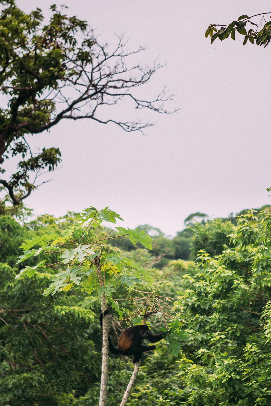 san-juan-del-sur-nicaragua-monkey.jpg