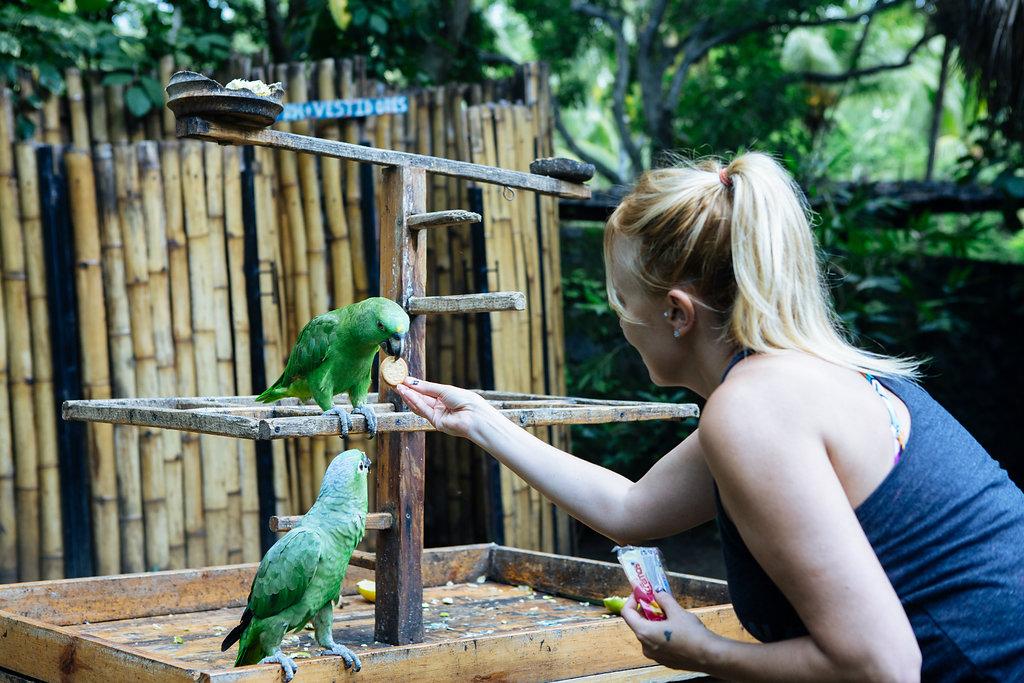 nicaragua-granada-laguna-del-apoyo-wildlife.jpg