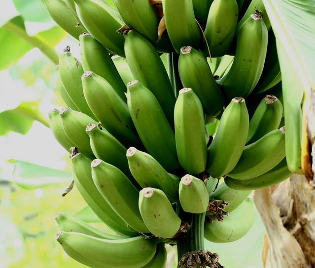 buncha-bananas-1323883-639x544.jpg