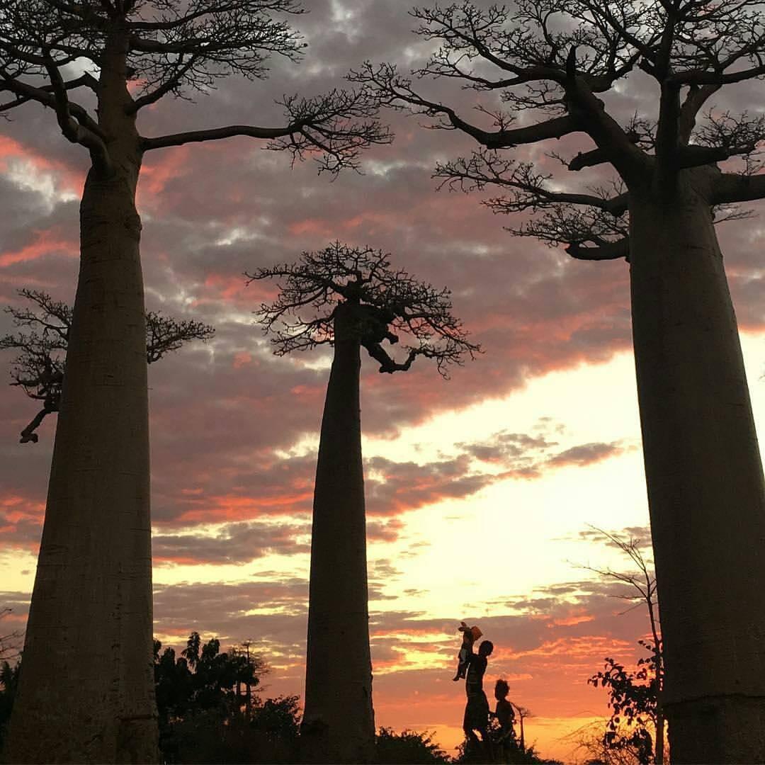Everyday Madagascar - @everydaymadagascar
