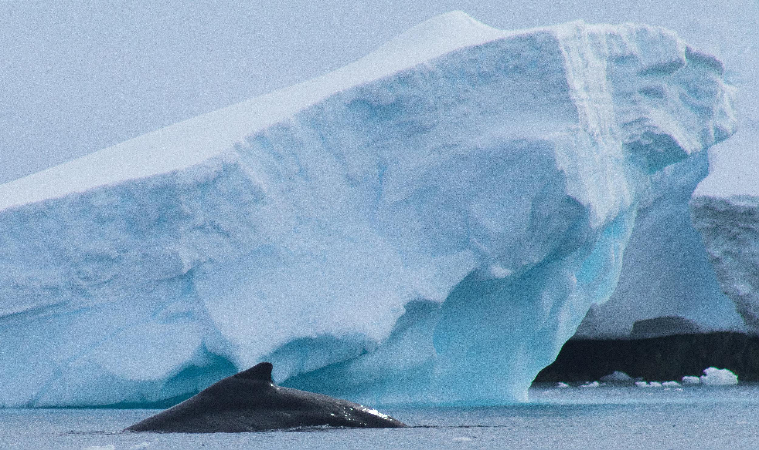 whale-5829.jpg
