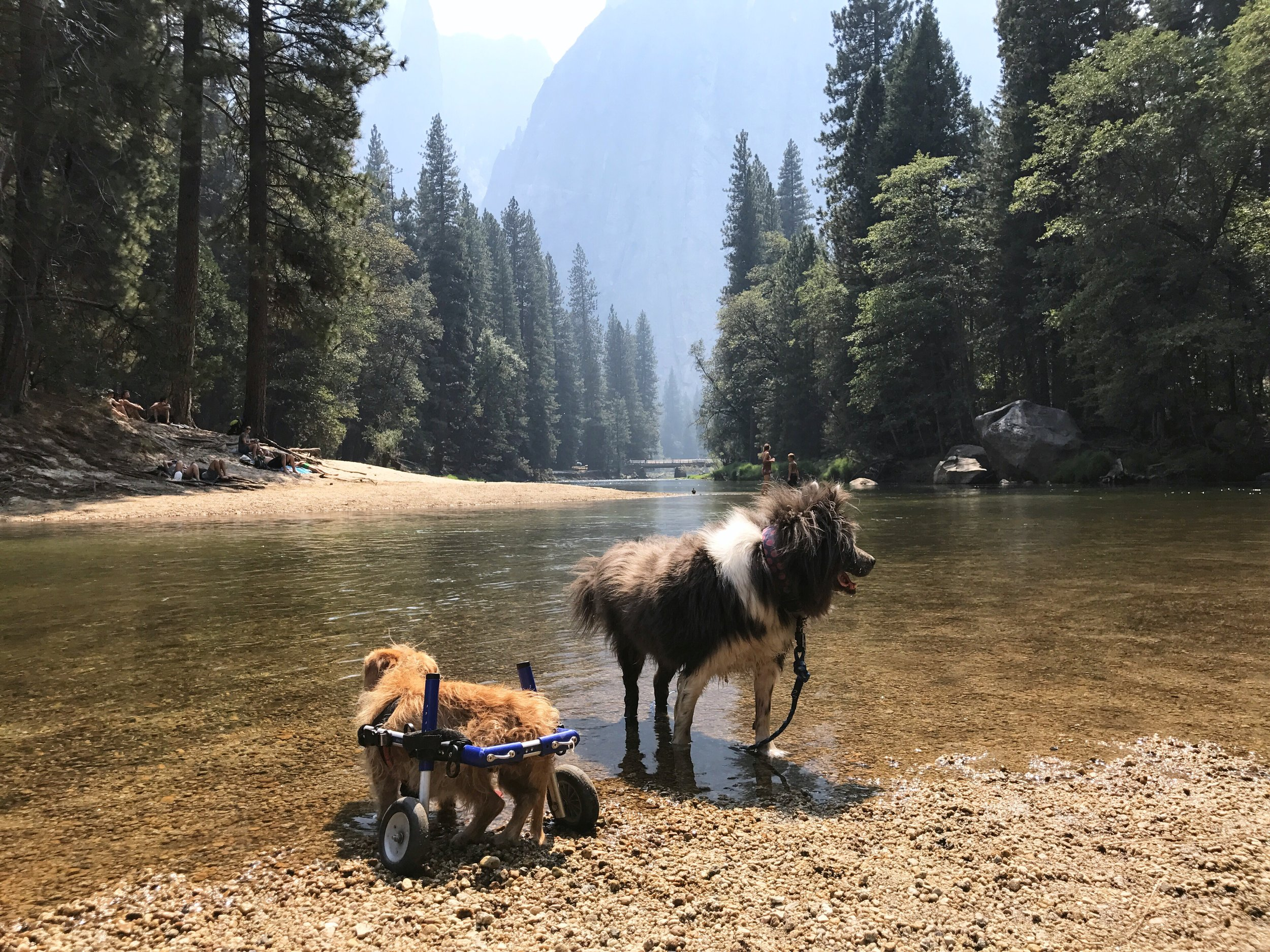 Charlie and Ziggy exploring just outside of Yosemite.