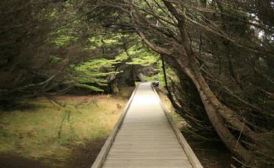 Laguna Point Boardwalk/MacKerricher State Park. photo credit hikespeak.com