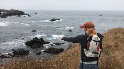 Exploring the Mendocino Coast with Charlie.