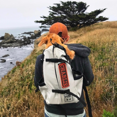 Charlie enjoying a hike along the coast in his doggy backpack.