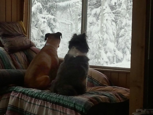 Sadie Lynne and Ziggy Marie having a chat about the snow forecast.
