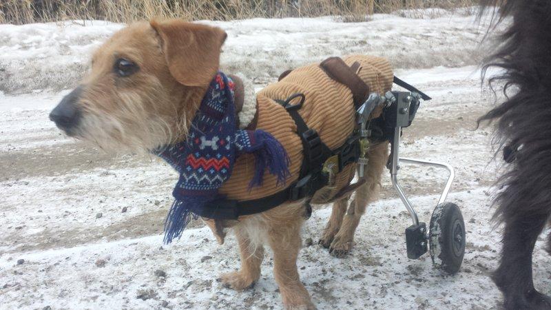 Charlie loves winter adventures.