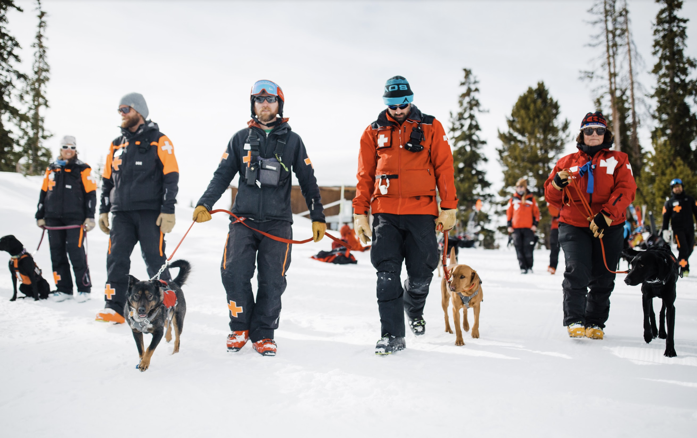 A group of C-RAD avalanche dog teams in Summit County, CO