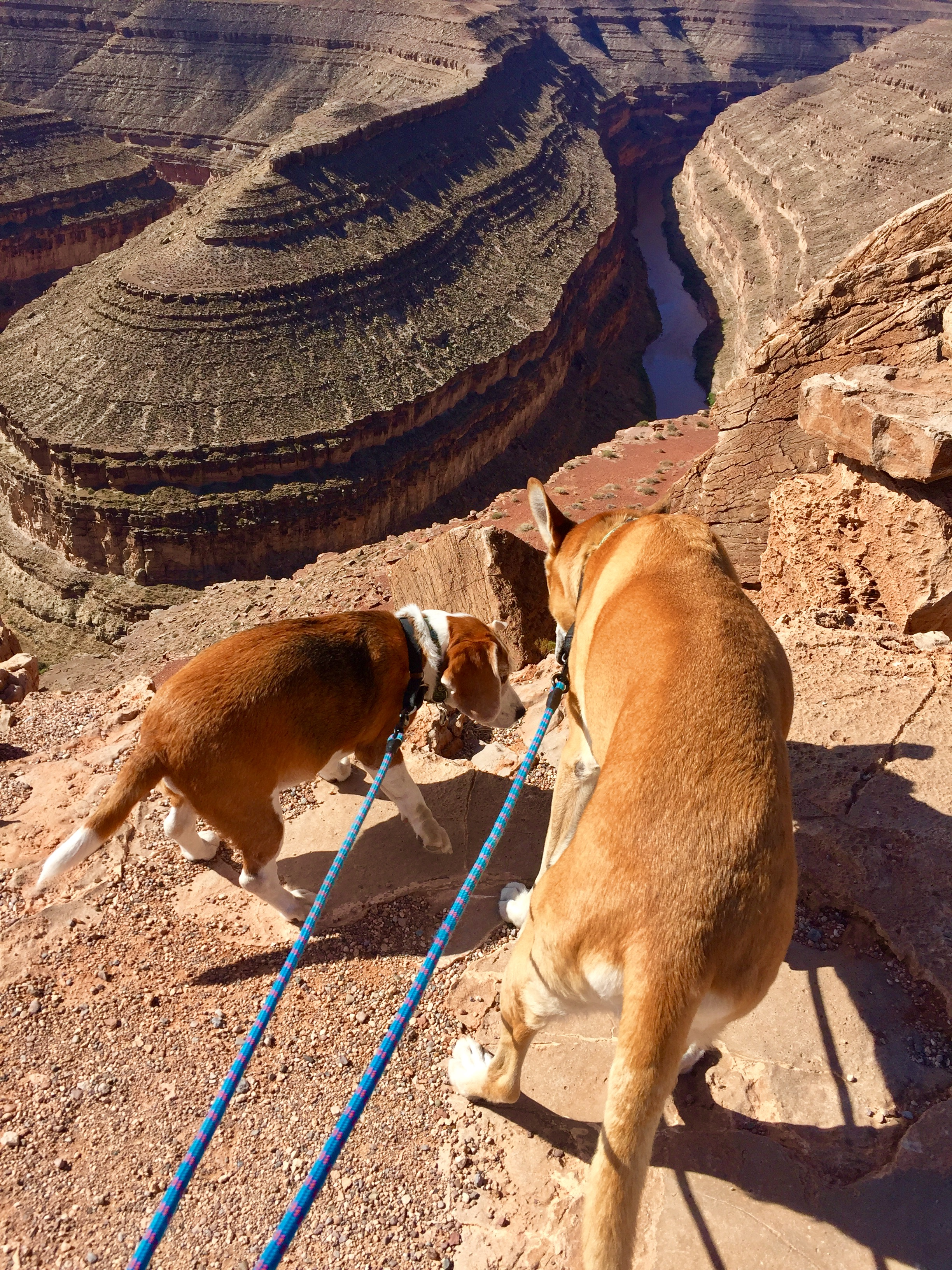 Solo and Castle exploring the Grand Canyon.
