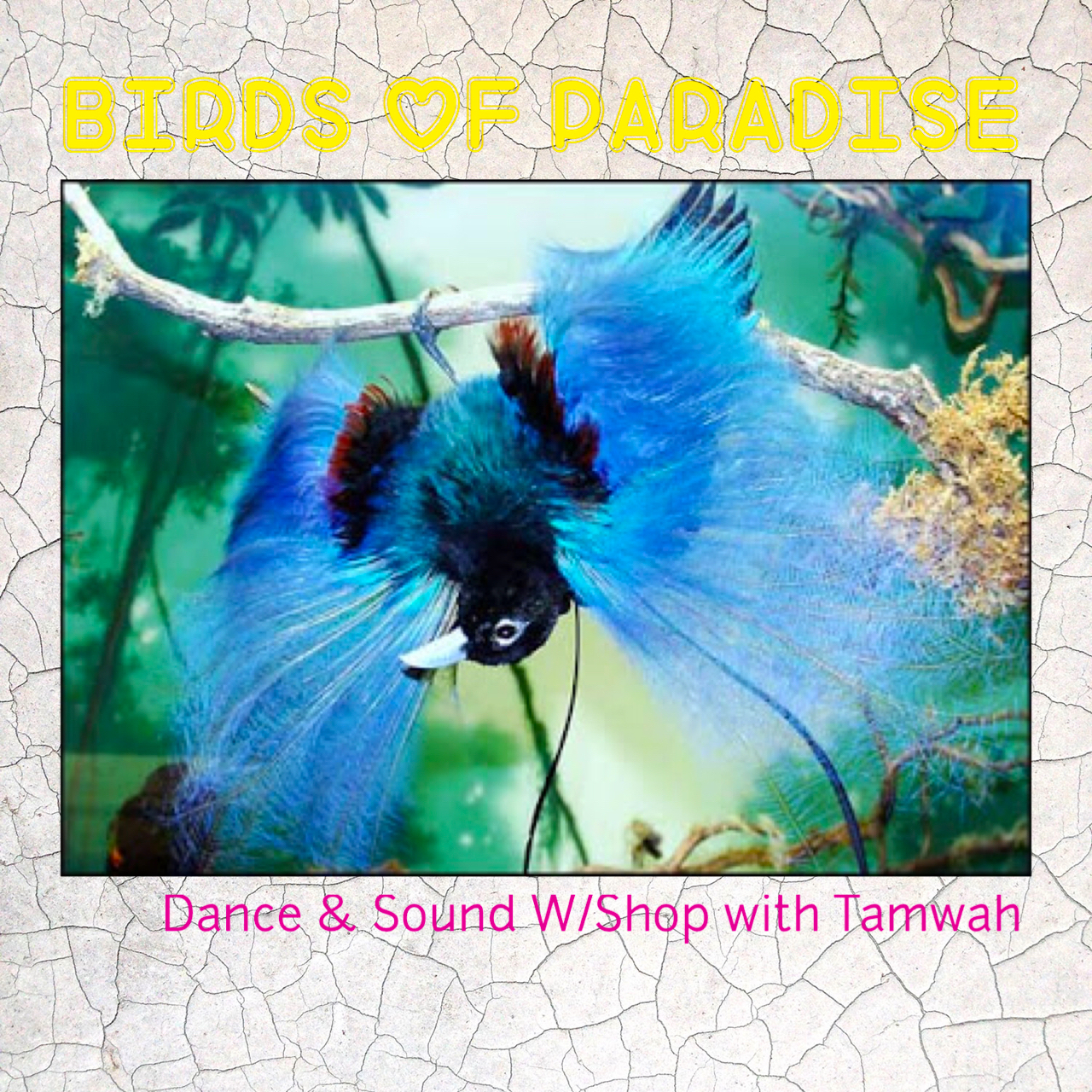Birds of Paradise Dance & Sound Workshop with TAMWAH