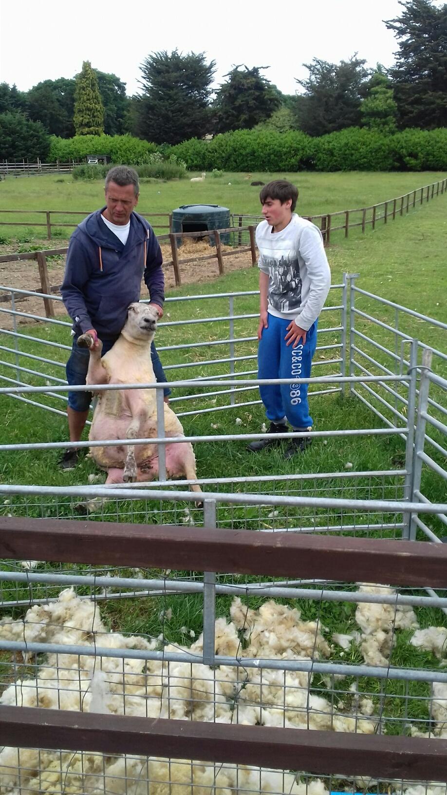 care farm 04.06.18.jpg