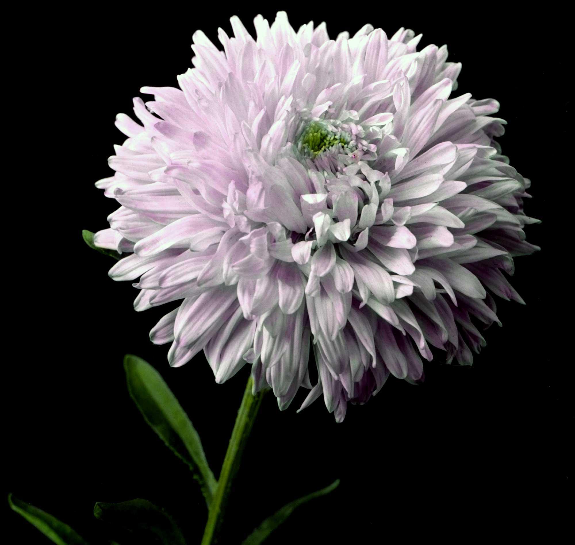 flowers-16.jpg