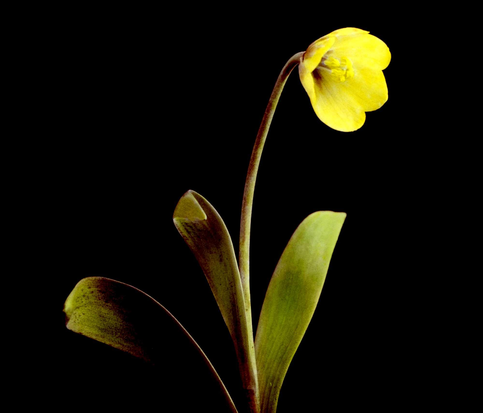 flowers-21.jpg