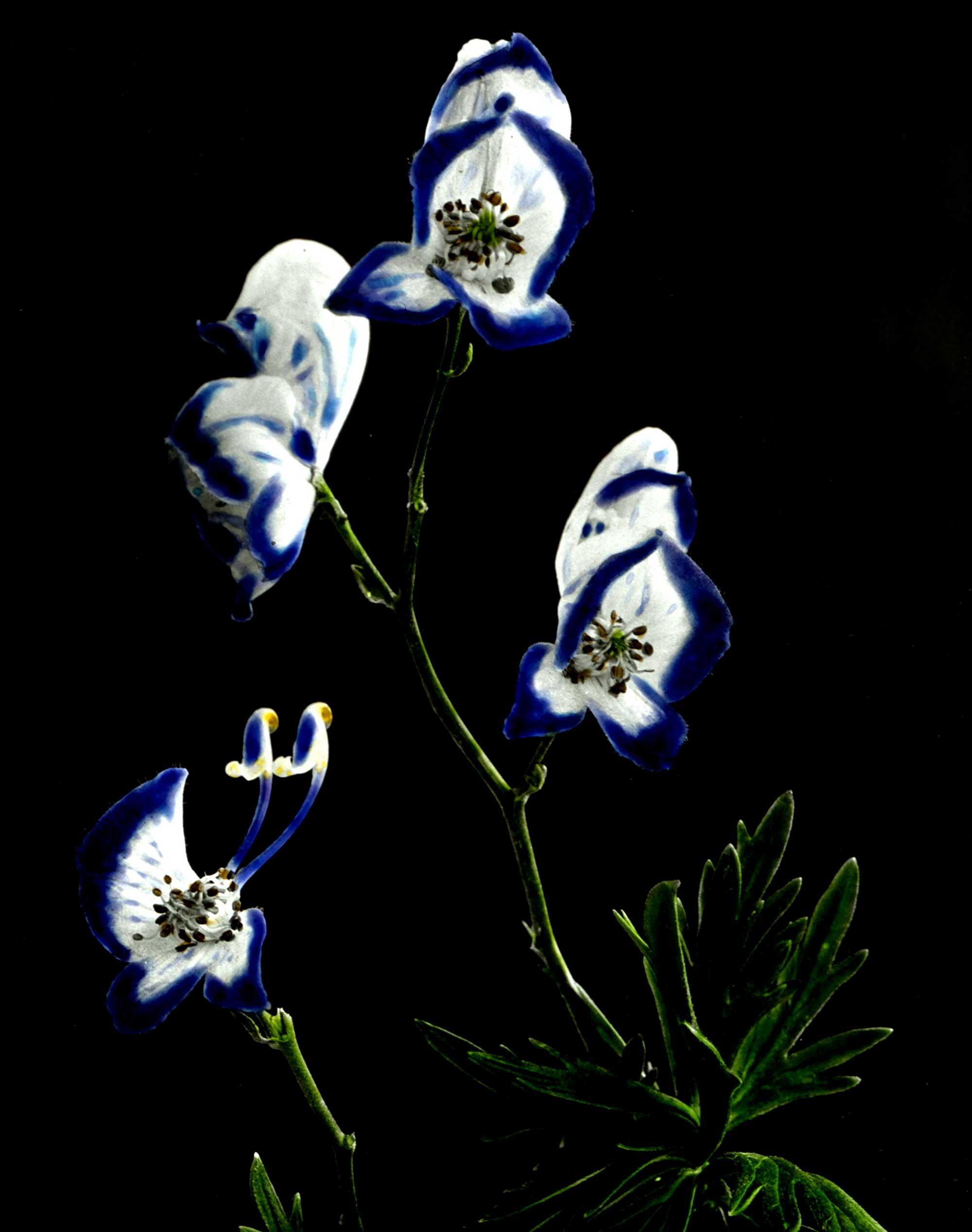 flowers-20.jpg