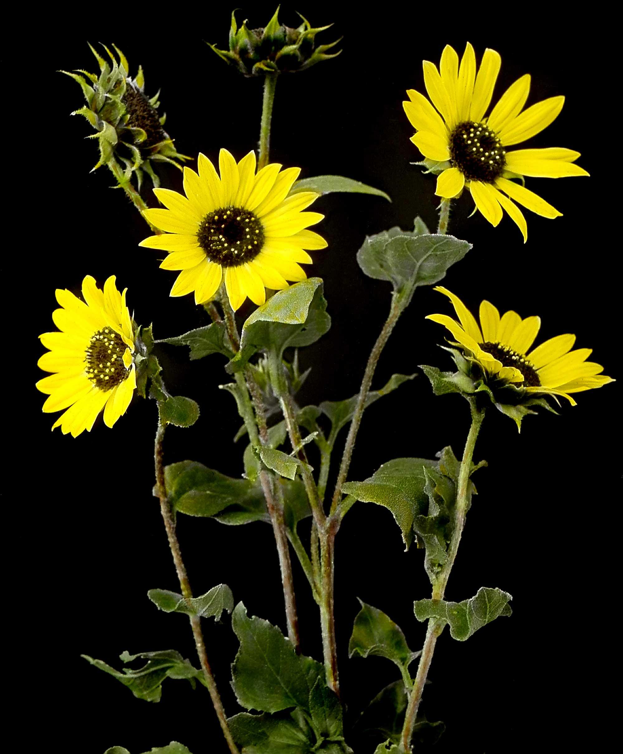 flowers-24.jpg