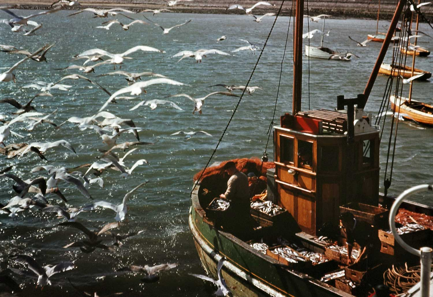 1960: A fishing trawler returning to Skerries, Co. Dublin