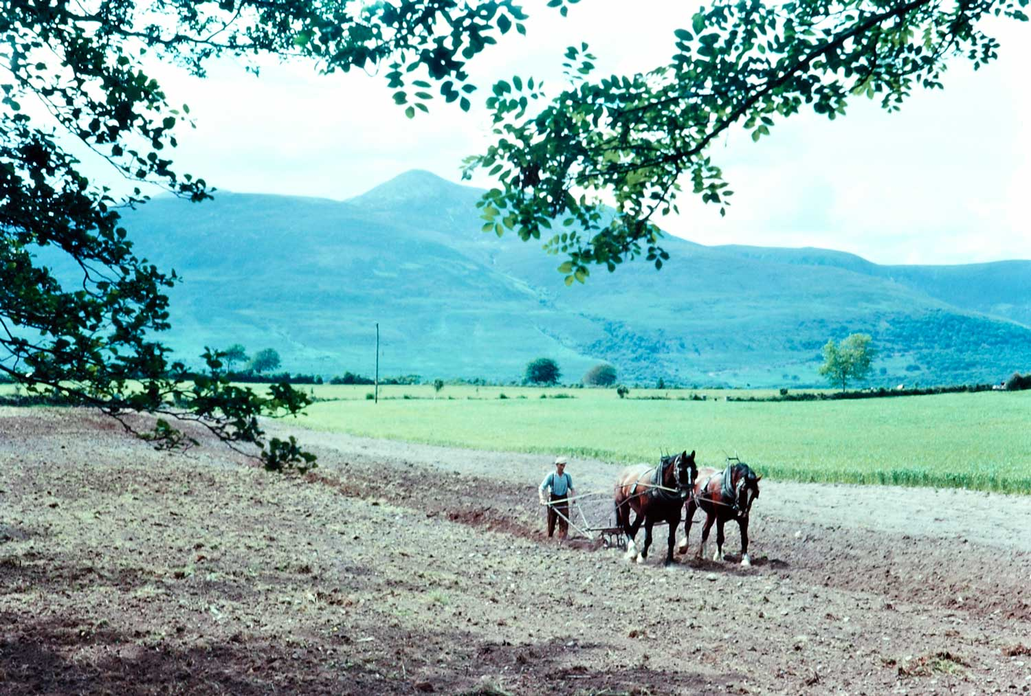 June 1963: Horse drawn plough, Ring of Kerry