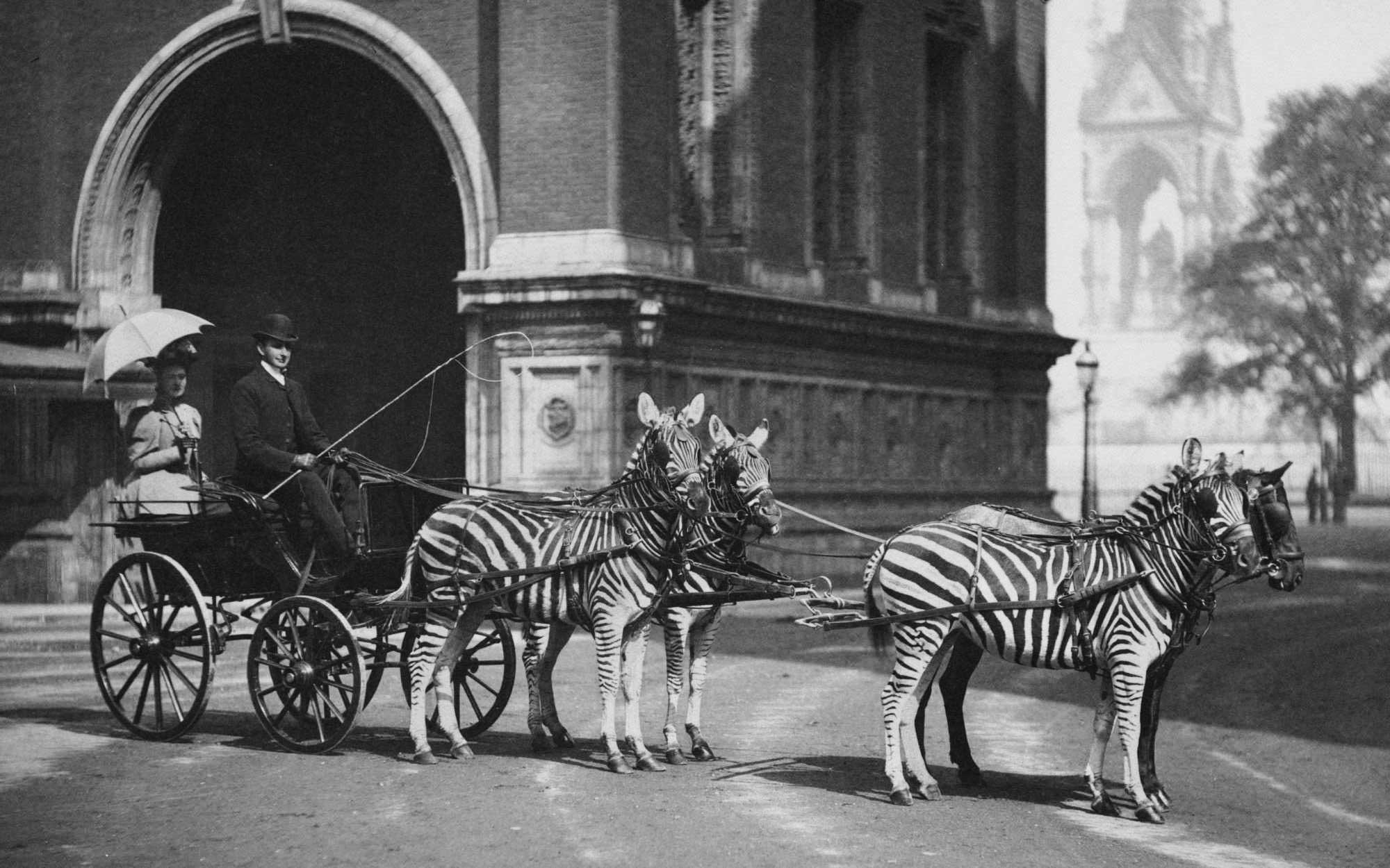 retronaut-content-zebra-carriage.jpg