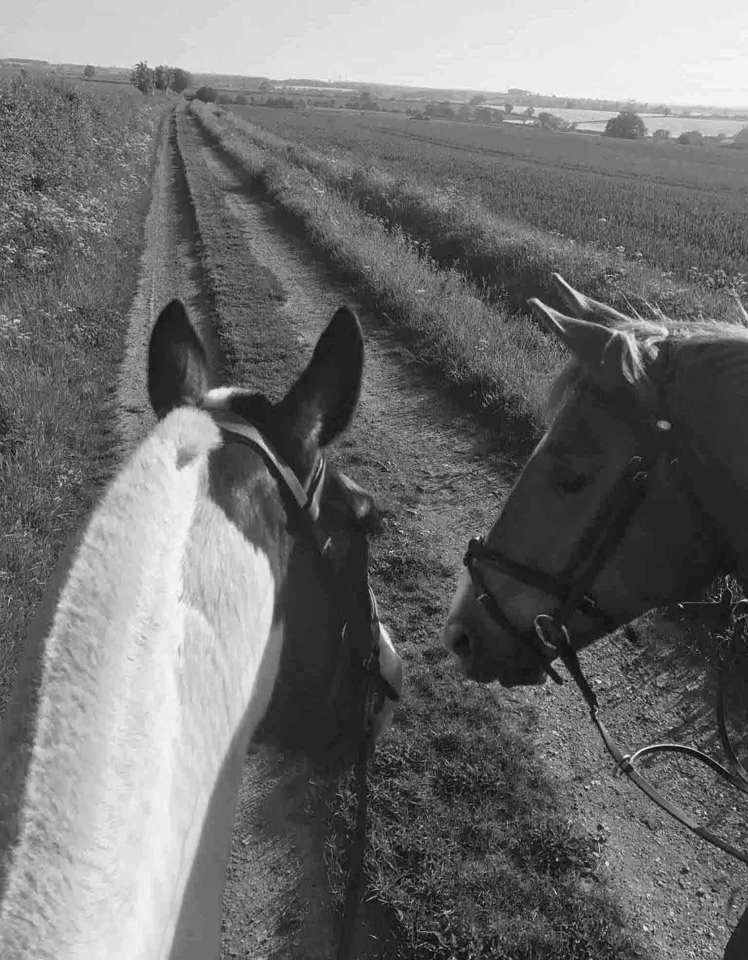 7 am hacking gamston wood equestrian livery and coaching bw web.jpg