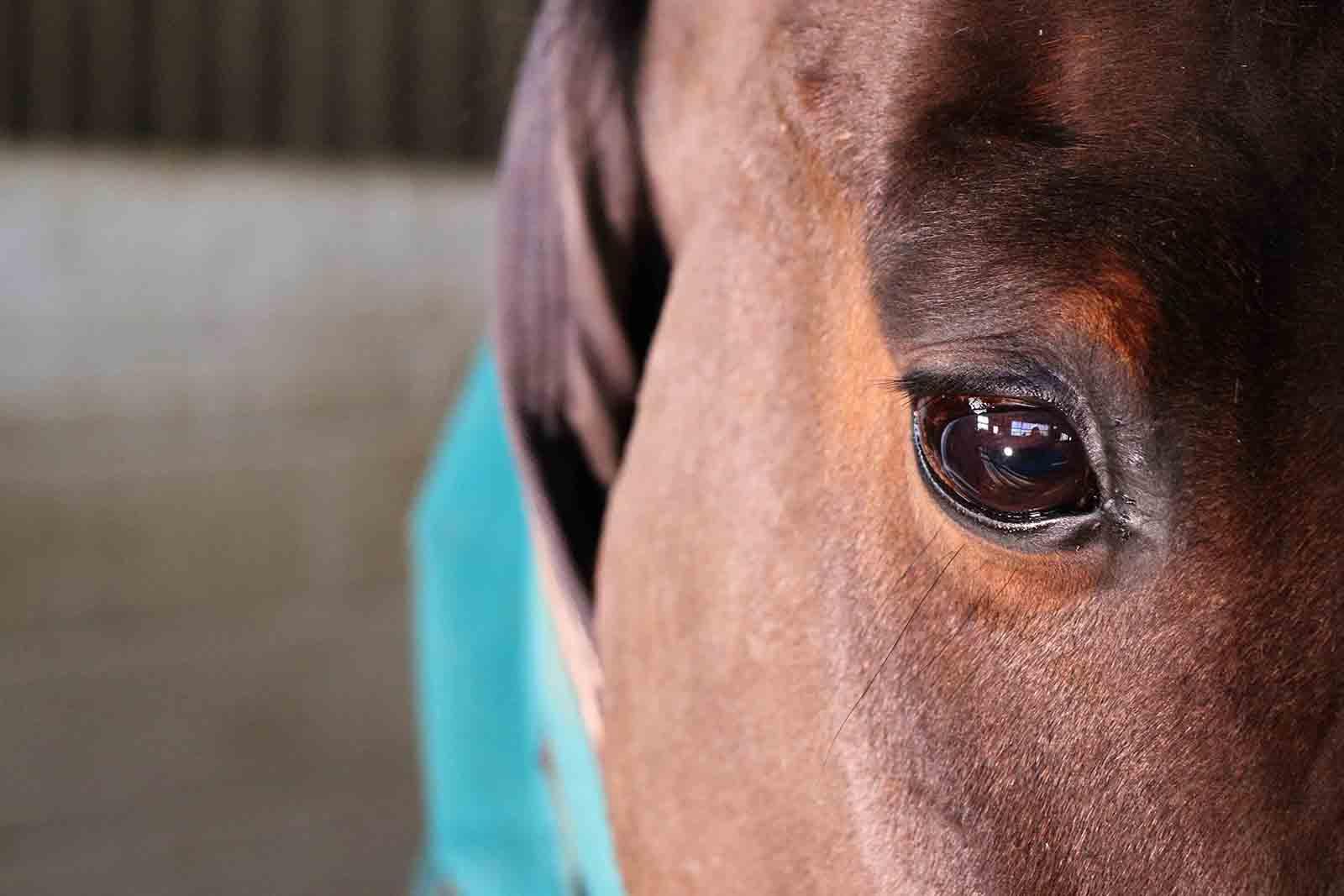 Gamston_Wood_Equestrian_livery_coaching_99_web.jpg