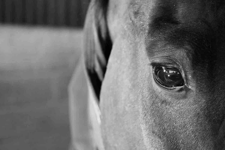 Gamston_Wood_Equestrian_livery_coaching_99_bw_web.jpg