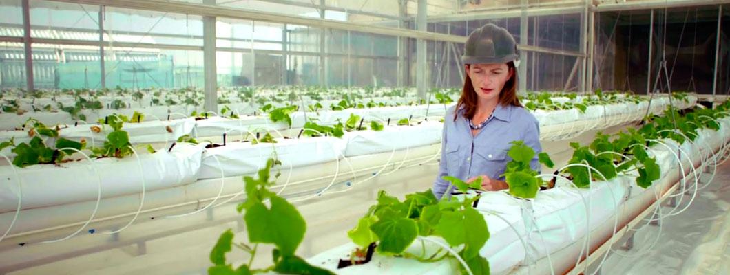 c-plantgirl_400.jpg