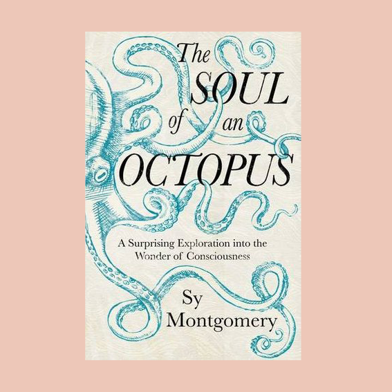I NEVER REALLY THOUGHT TOO MUCH ABOUT THIS PARTICULAR ANIMAL UNTIL I DISCOVERED THE BOOK   'THE SOUL OF AN OCTOPUS'   THAT SHEDS A LIGHT ON HOW INCREDIBLE SMART AND SENSITIVE THEY ARE. THEY CAN PLAY GAMES AND CAN DO TRICKS, THEY CAN TASTE WITH THEIR SKIN, THEY CAN CHANGE THEIR COLOR AND SHAPE AND HAVE THREE HEARTS. AND THEY CANNOT STAND WHEN THEY GET BORED. CAN YOU TELL I AM FASCINATED? - T